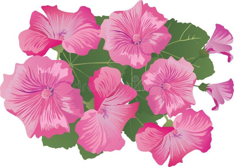 blommar stor rosa white vektor illustrationer