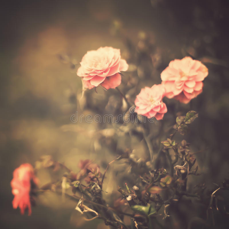 blommar tappning royaltyfri bild
