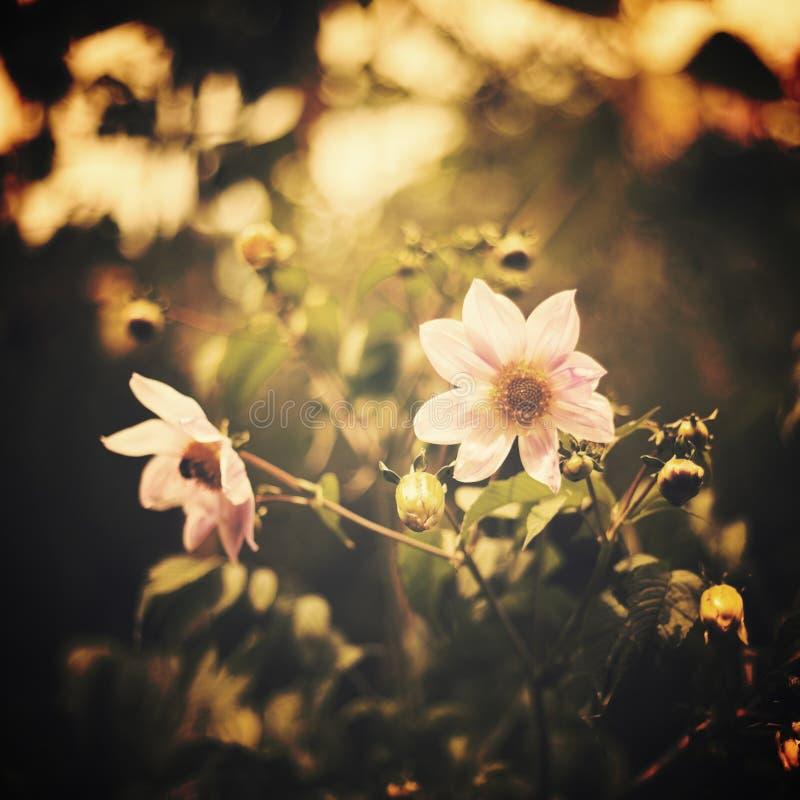 blommar tappning arkivfoton
