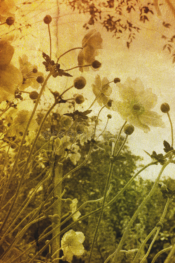 blommar tappning royaltyfria foton