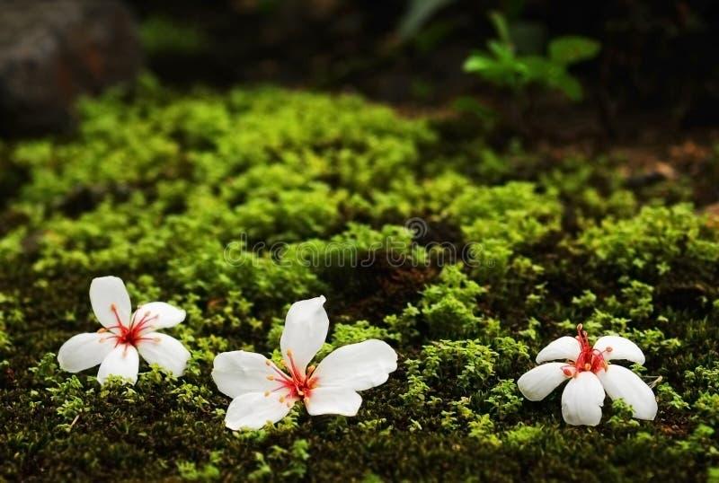 blommar treen tung royaltyfria foton