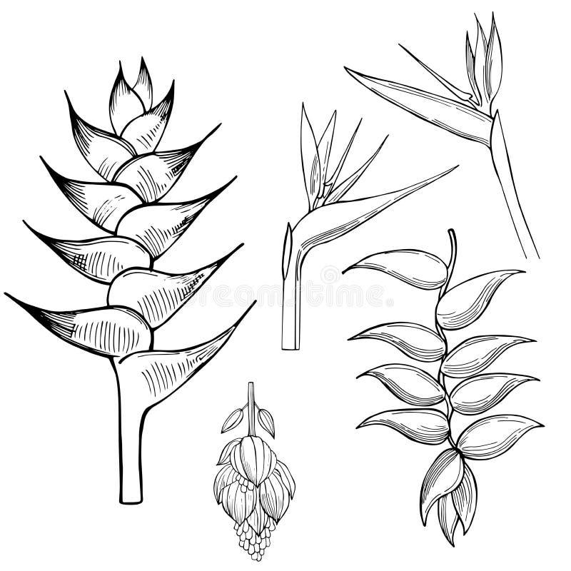 blommar tropiskt Vektorn skissar illustrationen stock illustrationer