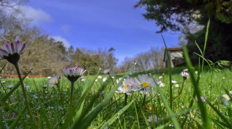 Blommar tusenskönor med himmel royaltyfria foton