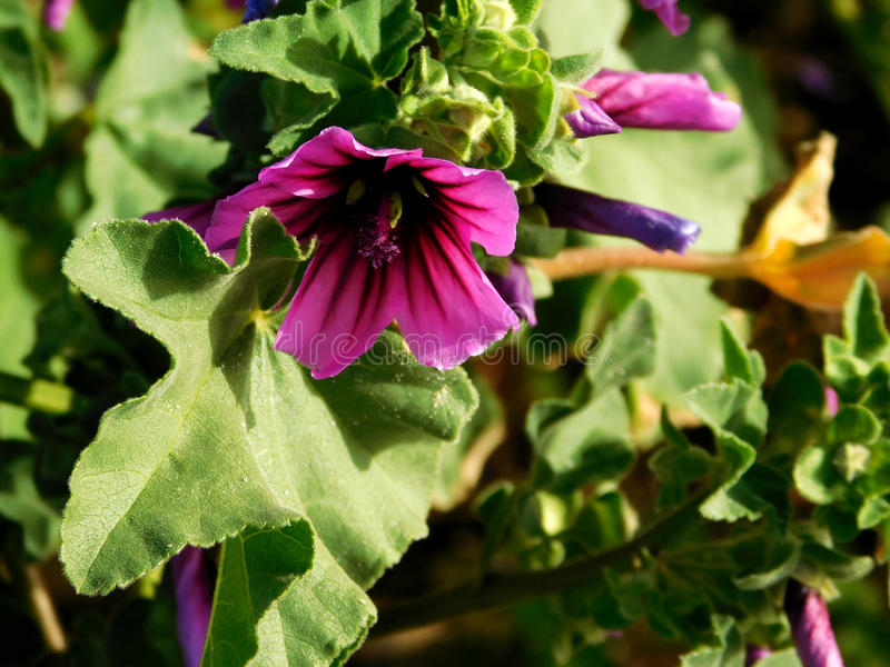 blommar utomhus- royaltyfri foto
