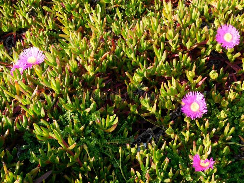 blommar utomhus- royaltyfria bilder