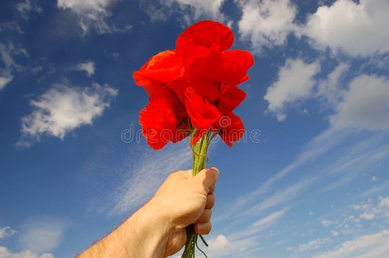 blommar vallmofrö royaltyfria foton