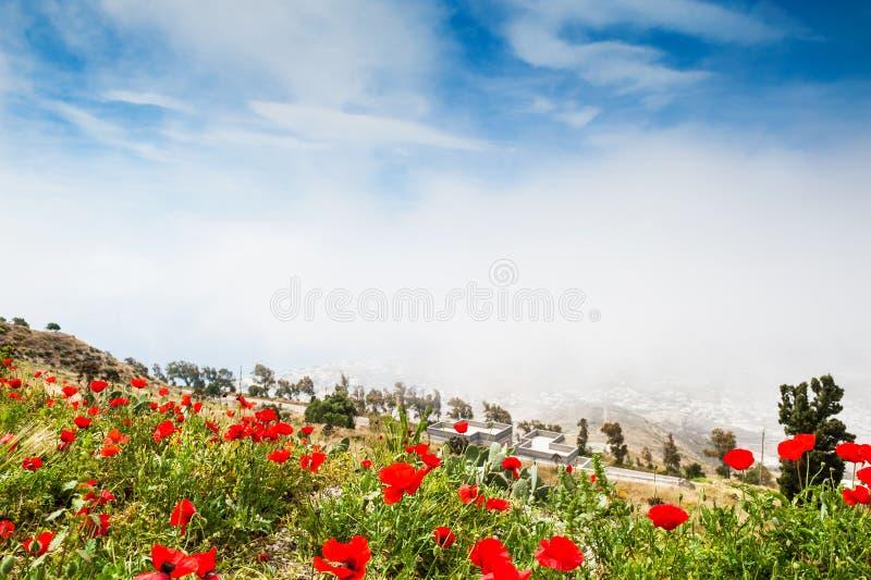 blommar vallmored fotografering för bildbyråer