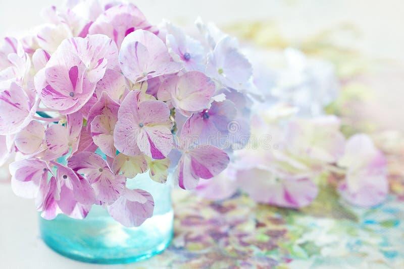 blommar vanlig hortensiapurple arkivfoton
