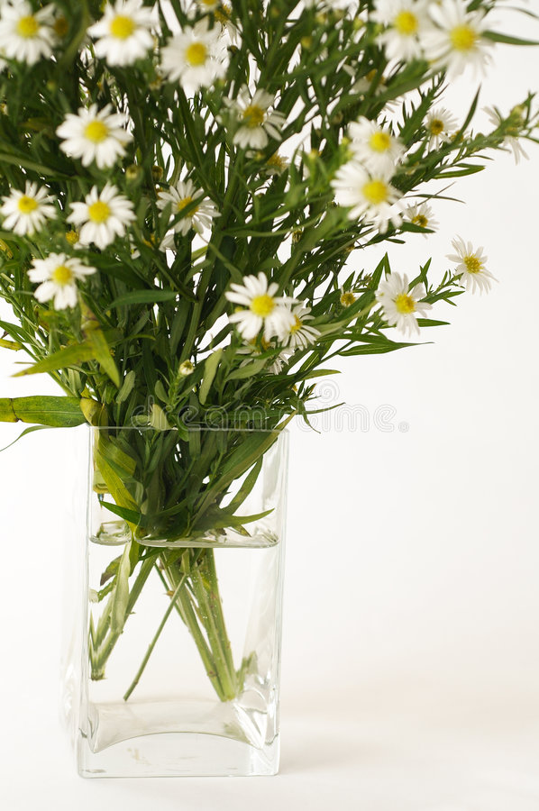 blommar vasewhite royaltyfri foto