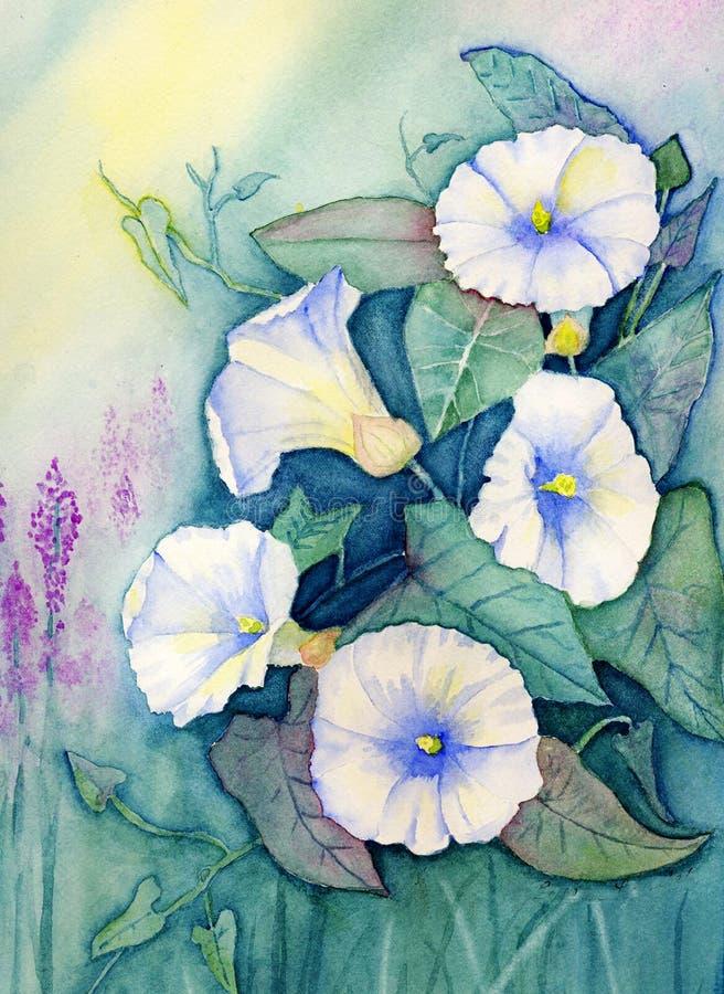 blommar vattenfärg för härlighetmorgonoriginal stock illustrationer
