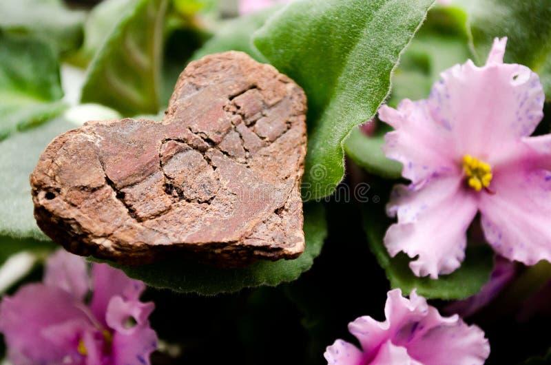 blommar violets Hjärta med orden 'förälskelse ', positiva sinnesrörelser Hjärtan av trä arkivbilder