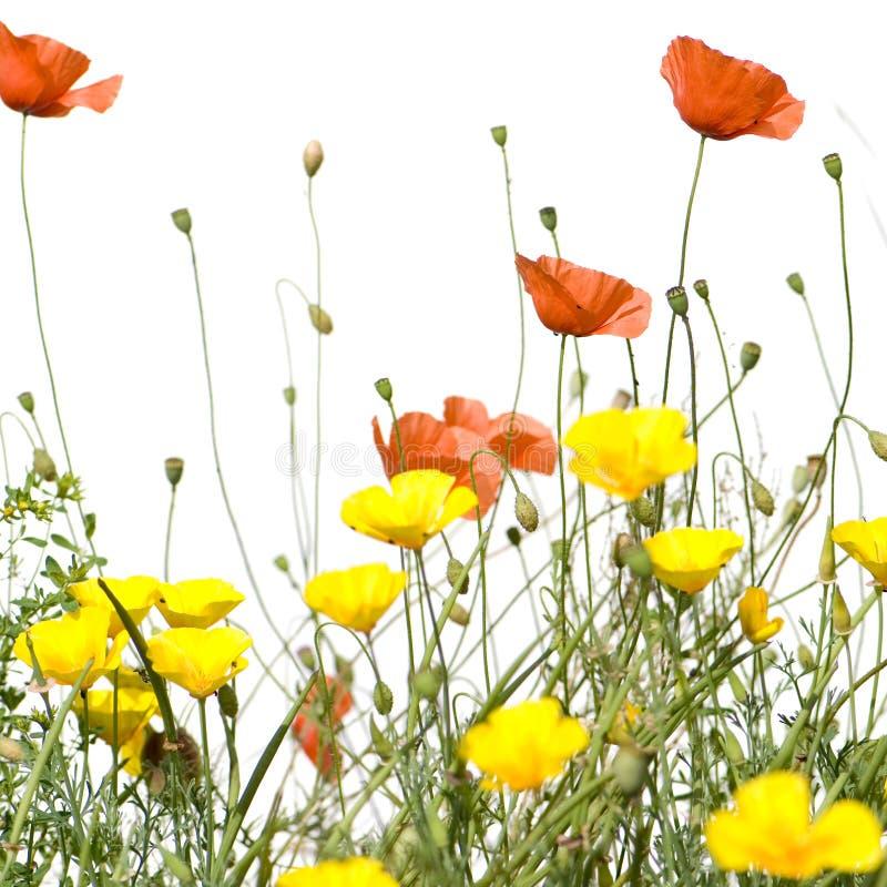 blommar wild royaltyfri bild