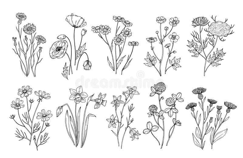 blommar wild Skissa botaniska beståndsdelar för vildblomma- och örtnaturen För sommarfält för hand utdragen uppsättning för vekto vektor illustrationer