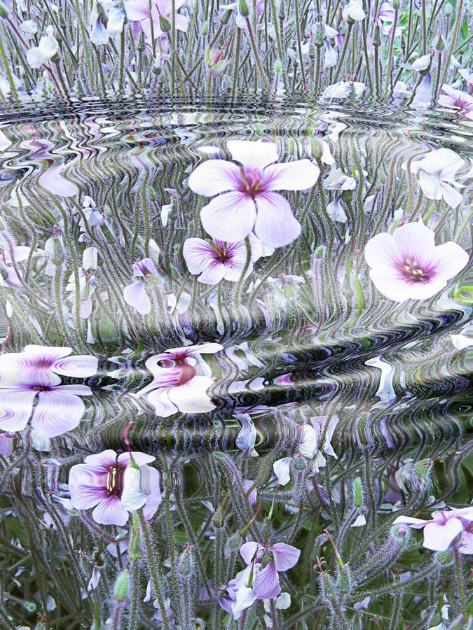 blommareflexionsvatten vektor illustrationer