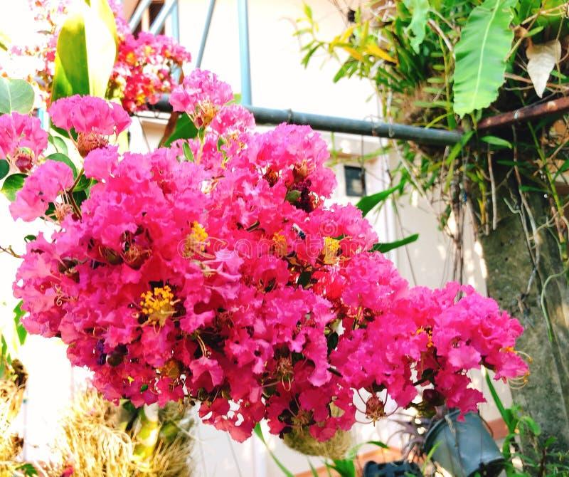 Blommarosa färger royaltyfri fotografi
