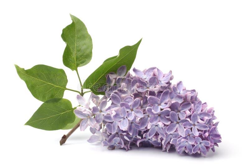 blommas filiallilor arkivfoto