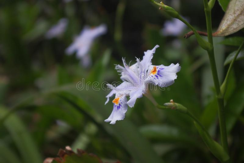 blommas orchids royaltyfria foton