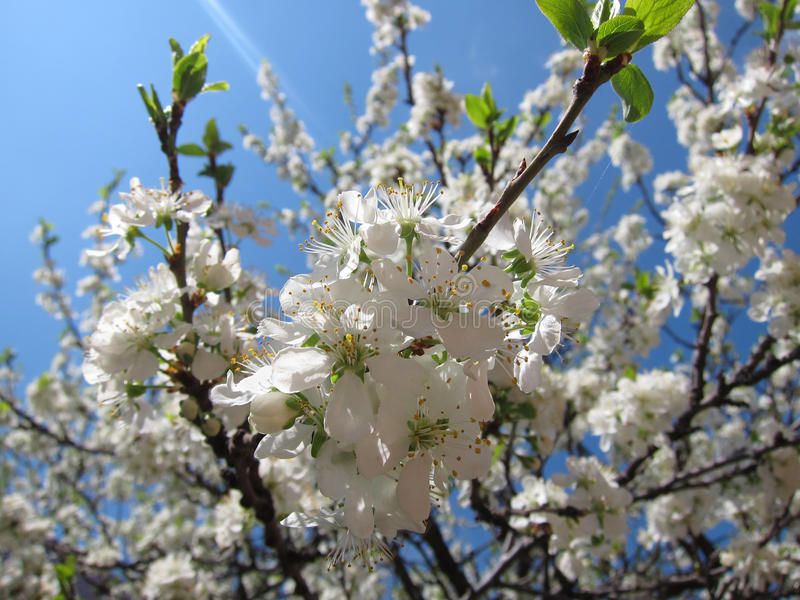 blommas trees arkivfoton