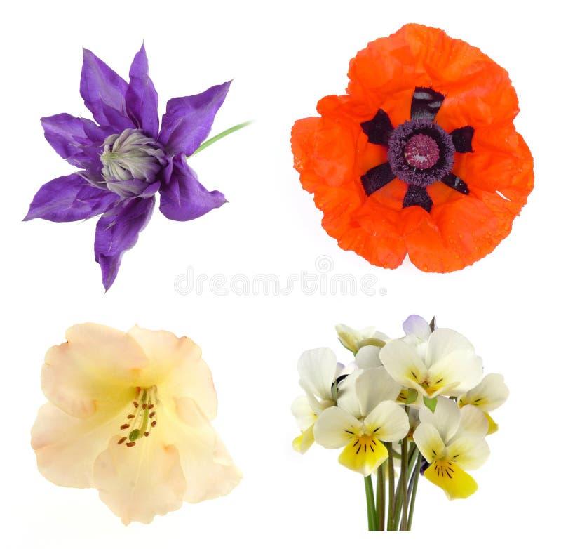 Blommaset royaltyfria foton