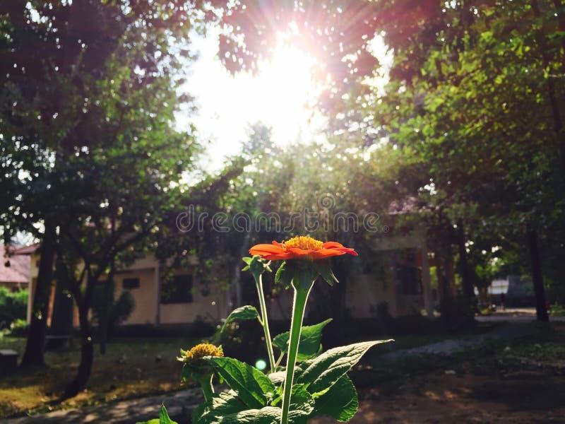 Blommasken i solen arkivfoto
