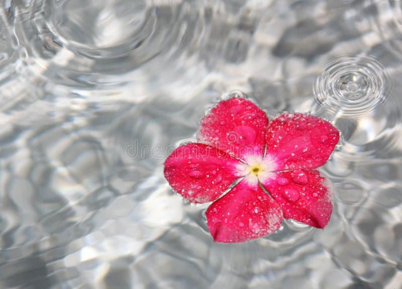 blommaspringbrunnvatten arkivbilder
