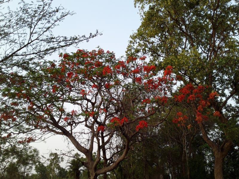 Blommaträdet fotografering för bildbyråer