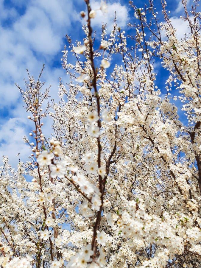 Blommaträdet för full blom parkerar in royaltyfri foto