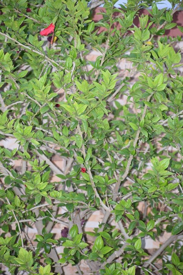 Blommaträdet med bladet och filialer royaltyfri foto