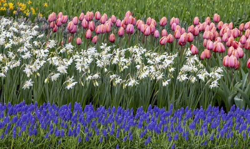 Blommaträdgård - detalj royaltyfri foto