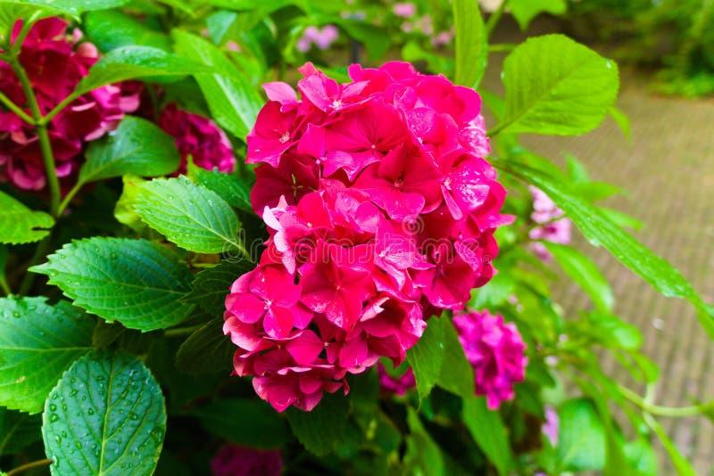 Blommaträdgård som blommar i sommarsolen royaltyfria foton