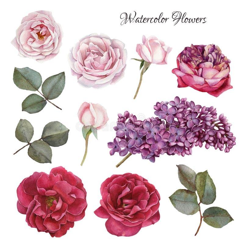 Blommauppsättning av den vattenfärgrosor och lilan stock illustrationer