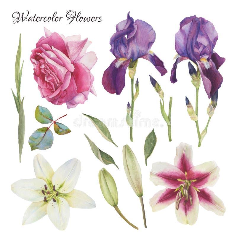 Blommauppsättning av hand drog vattenfärgliljor, iris, ros och sidor vektor illustrationer