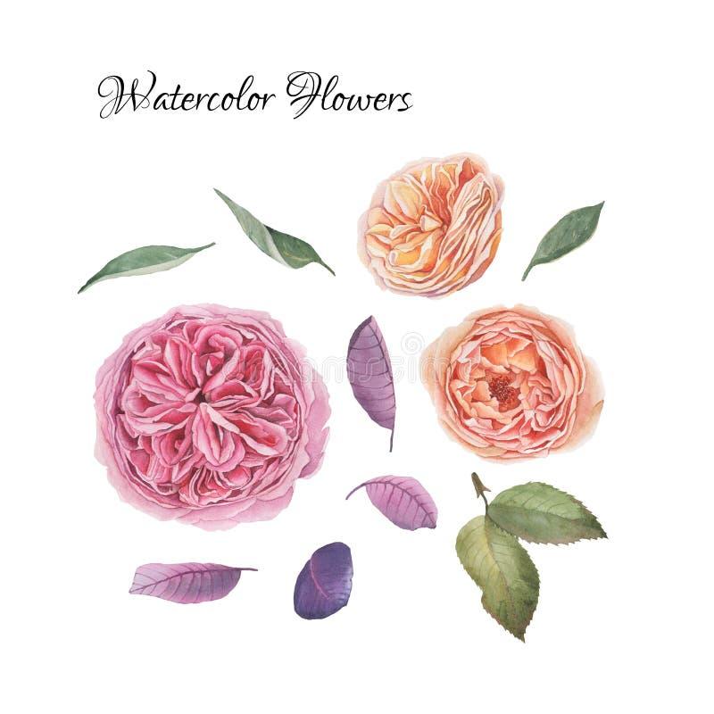 Blommauppsättning av hand drog vattenfärgrosor stock illustrationer