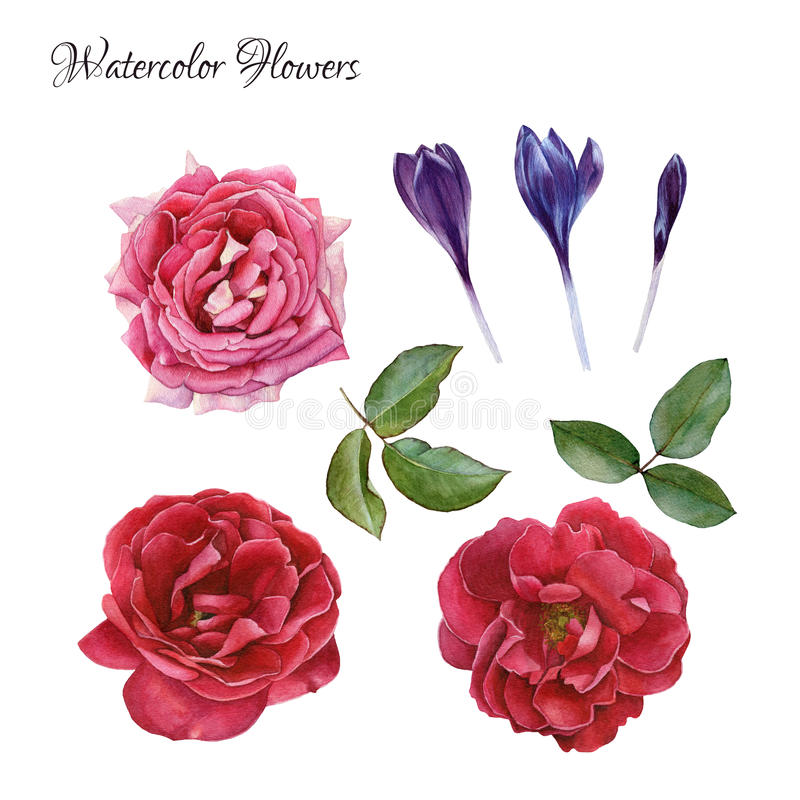 Blommauppsättning av hand drog vattenfärgrosor, krokusar och sidor stock illustrationer