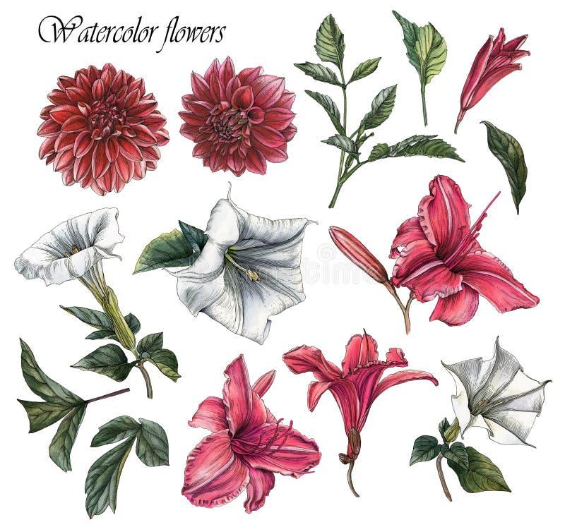 Blommauppsättning av vattenfärgdahlior, liljor, daturablommor och sidor royaltyfri illustrationer