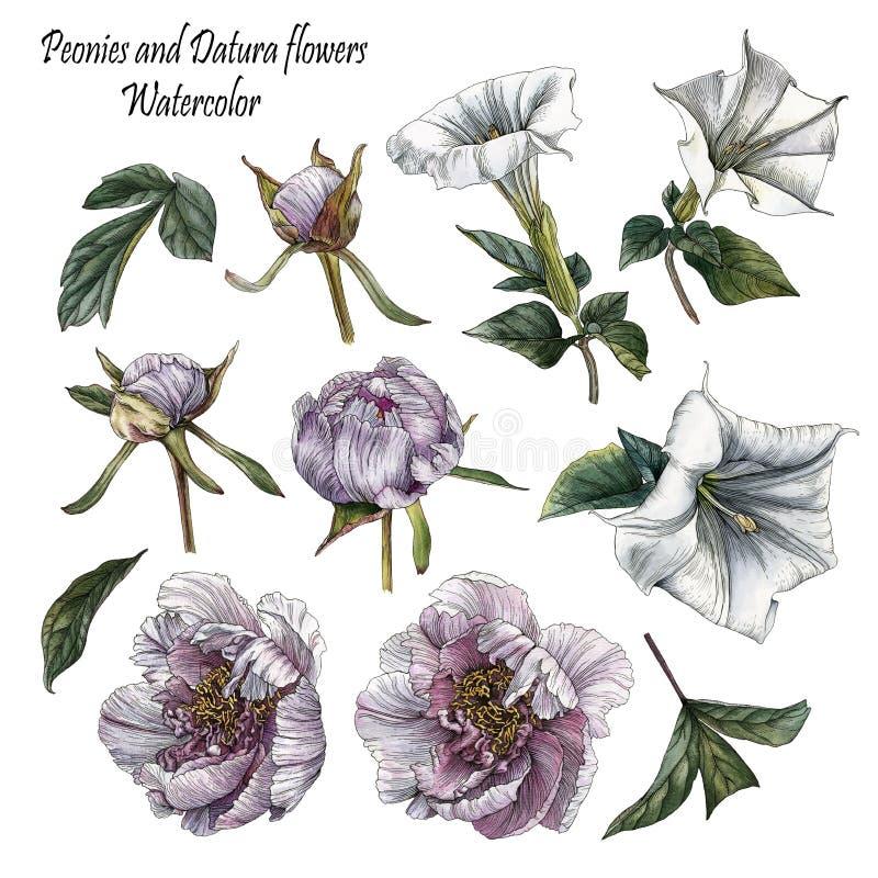 Blommauppsättning av vattenfärgpioner, daturablommor och sidor royaltyfri illustrationer