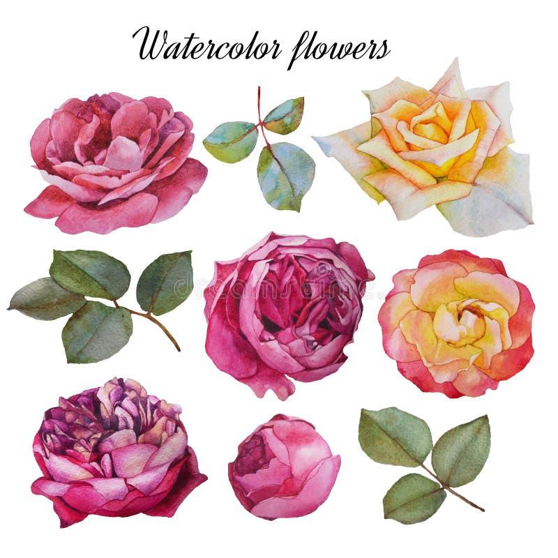 Blommauppsättning av vattenfärgrosor och sidor stock illustrationer