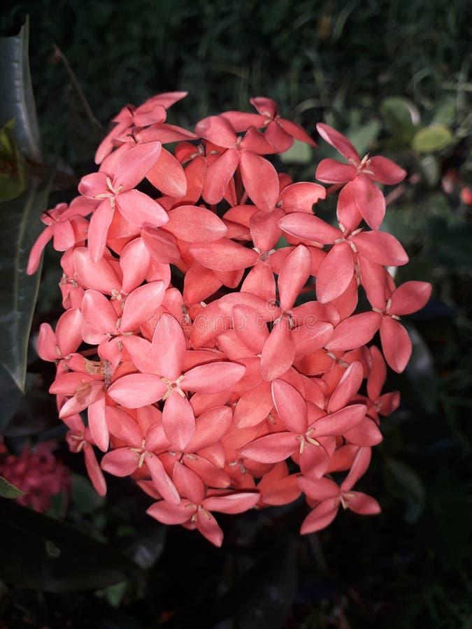 Blommauppsättningen på den västra eftermiddagtiden arkivbild