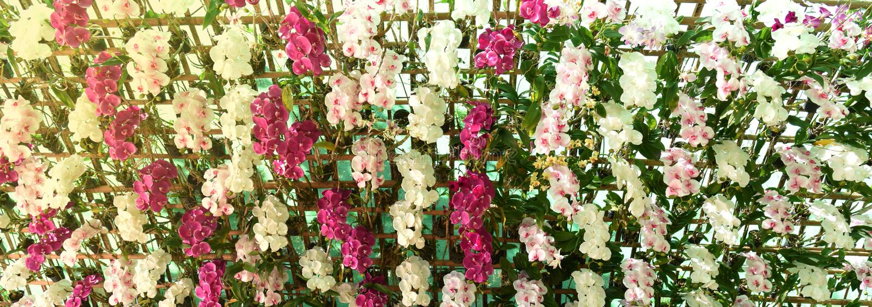 Blommavägg royaltyfri foto