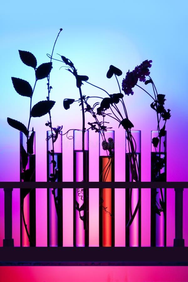 blommaväxtprovrör fotografering för bildbyråer
