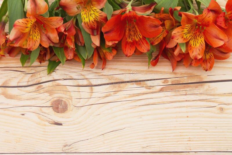 Blommavårbakgrund royaltyfri fotografi