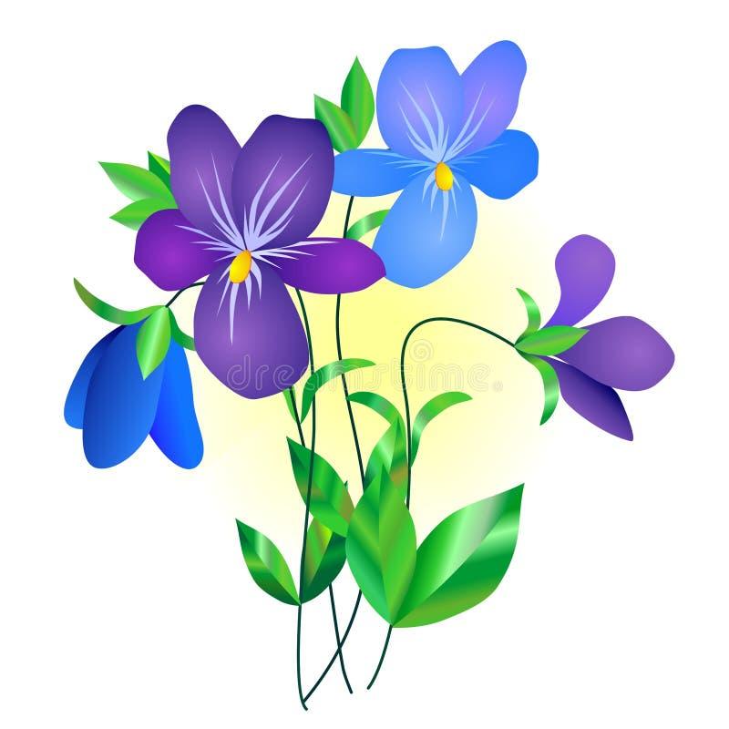 blommaviolet stock illustrationer