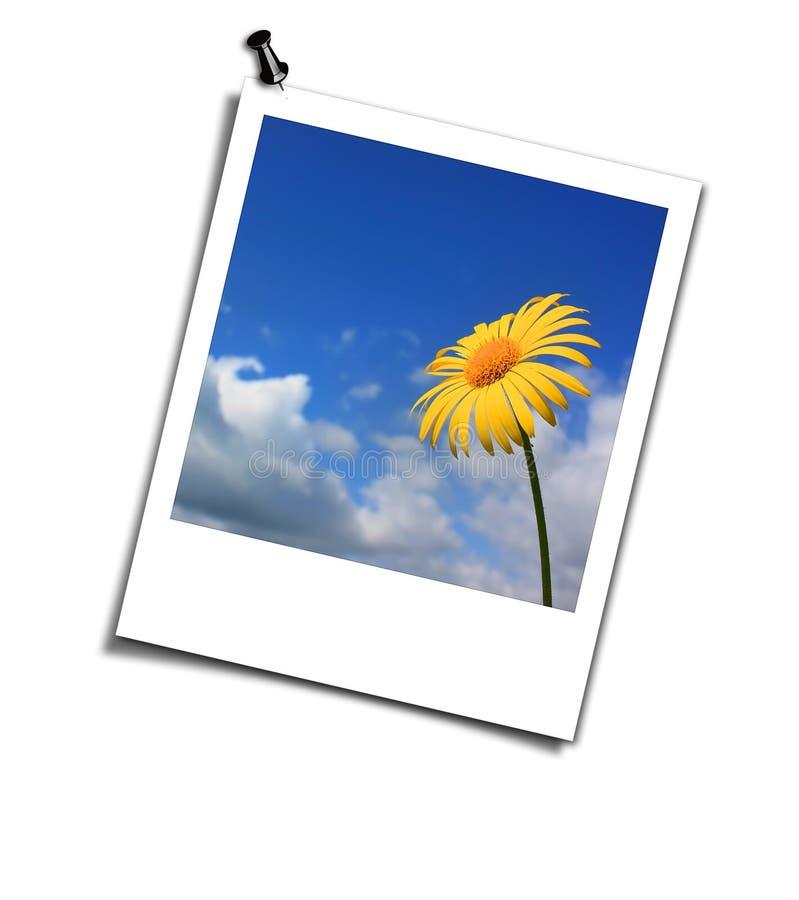 blommavykortyellow royaltyfria bilder
