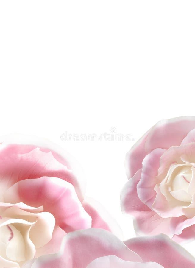 blommig bakgrund arkivfoton