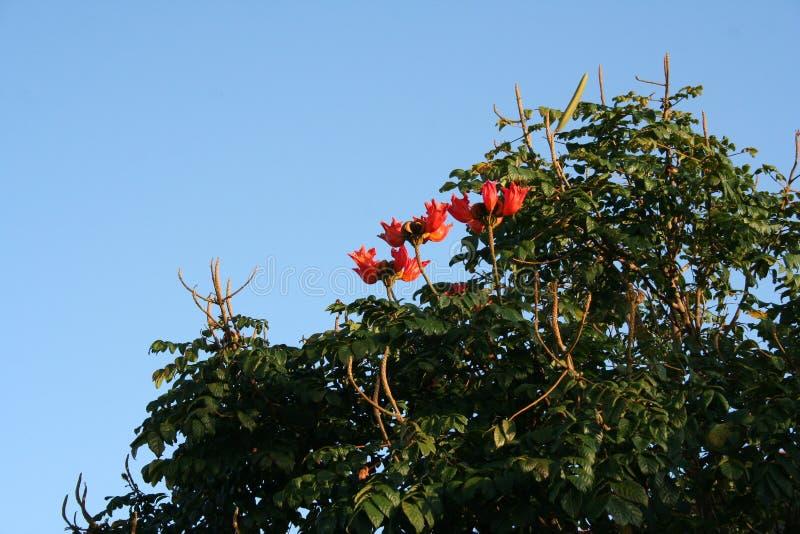 Blommig dunge i en tropisk zon royaltyfria bilder