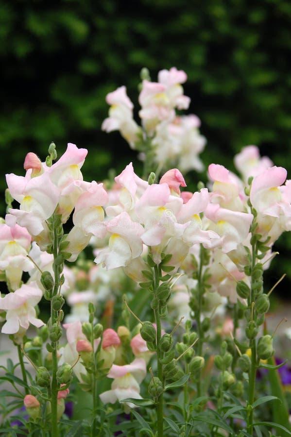 blommig lilja royaltyfria foton