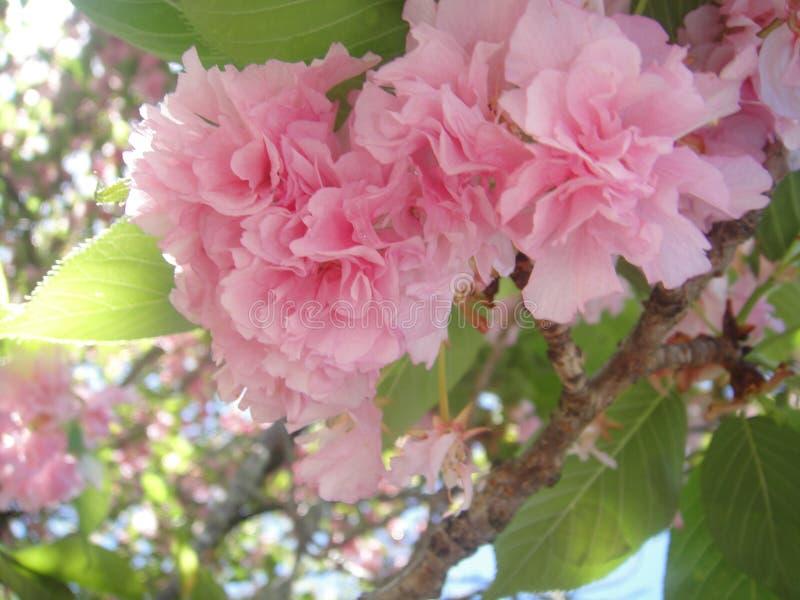 blommigt royaltyfria foton