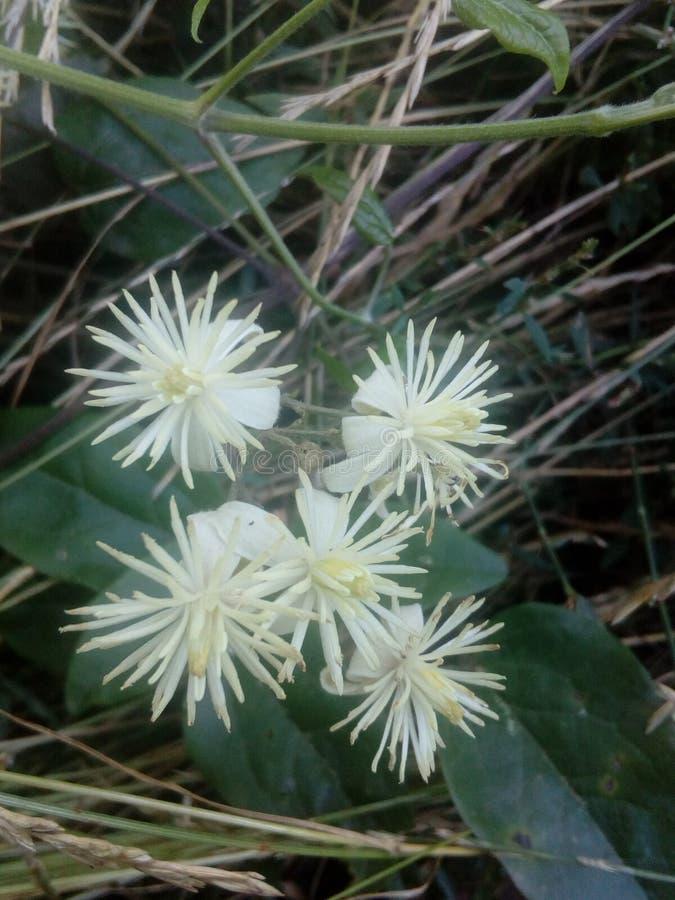 blommor!!! ðŸ'˜ fotografering för bildbyråer