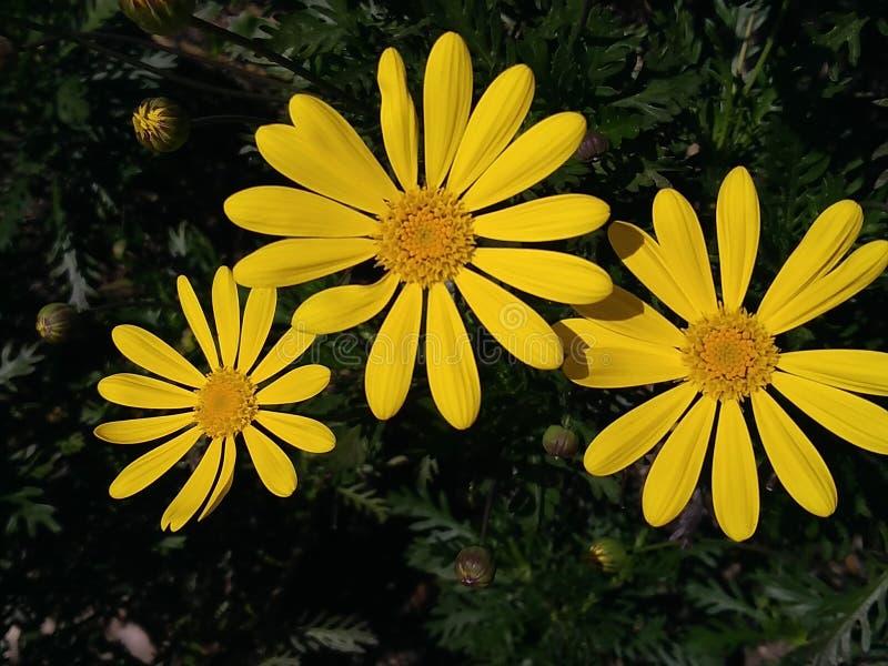 Blommor öppnas på våren royaltyfria foton
