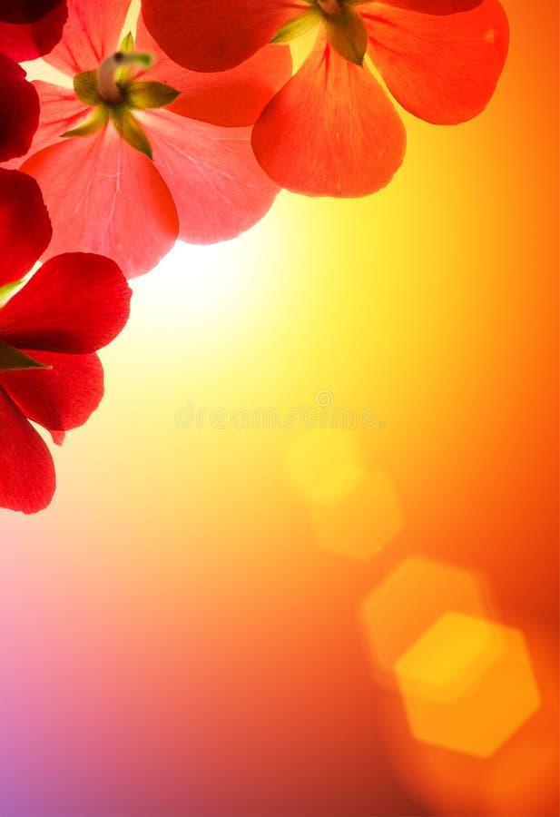 blommor över rött solsken arkivbild
